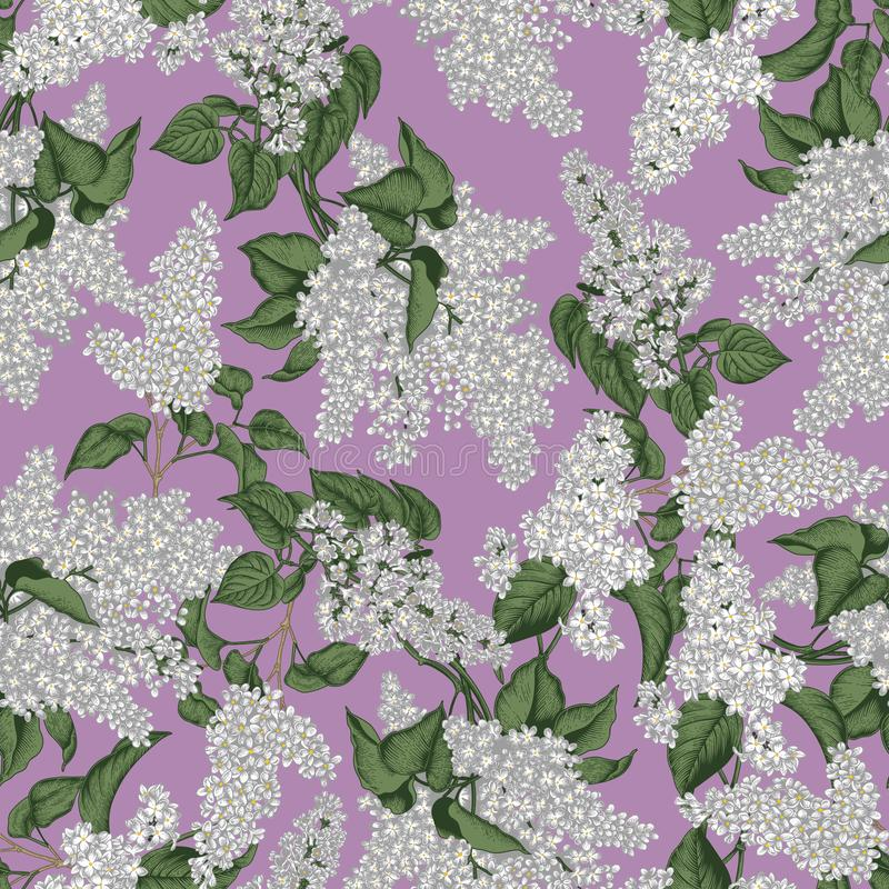 Lilac. Vector seamless pattern in vintage style. Spring flowers. Flowering shrubs. Plants in parks and gardens. royalty free illustration