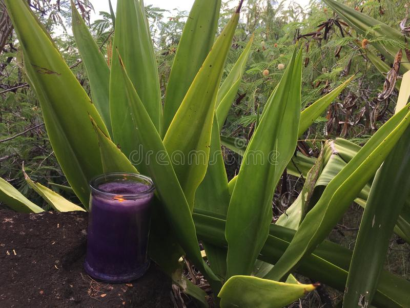 Lilac and Violet Candle Burning during Fall with Two Flames in Waimea Canyon in Kauai Island, Hawaii. royalty free stock images