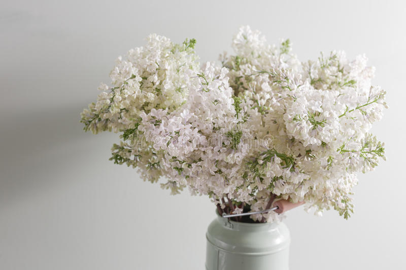 Lilac white Syringa flowers in vase. Spring background with white flowers in rustic Can on wooden table. Lilac white Syringa flowers in vase. Spring background royalty free stock photo