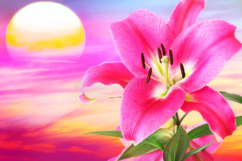 Lilac Zonsondergang stock foto's