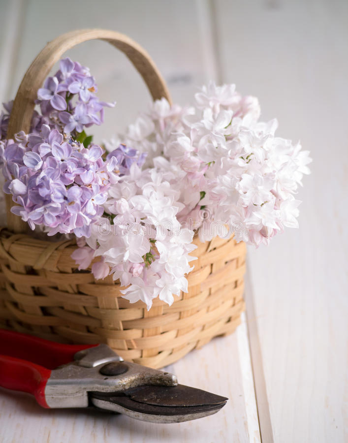 Lilacs In A Basket Stock Image