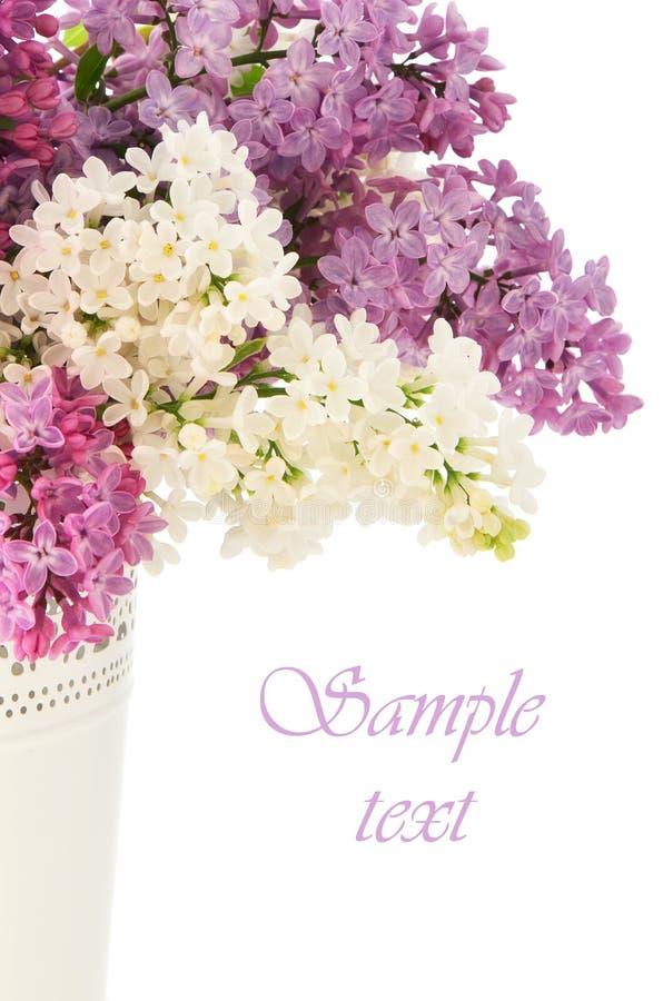 Download Lilacs stock photo. Image of pink, text, copy, seasonal - 40563020