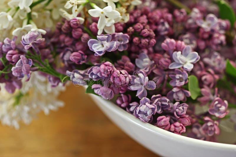 Lilacs roxos na bacia branca imagem de stock