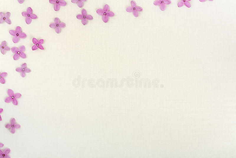 Lilan blommar backgrund arkivfoto