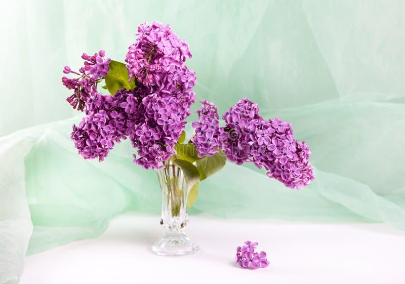 lile purpurowy zdjęcie royalty free