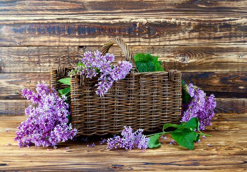 Lilego bukieta purpurowy drzewny tło zdjęcie royalty free