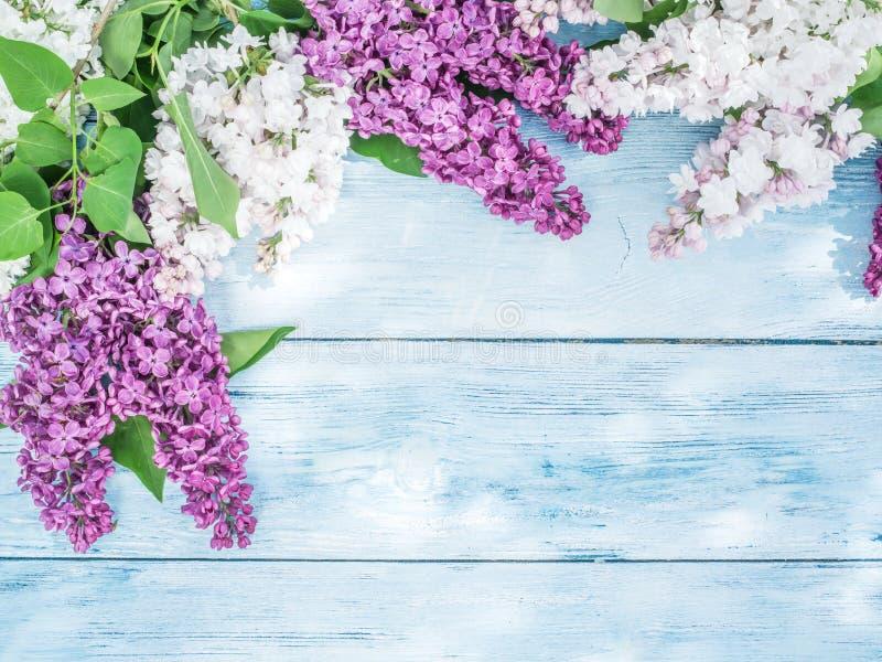 Download Lili kwitnący kwiaty zdjęcie stock. Obraz złożonej z 1 - 57652202