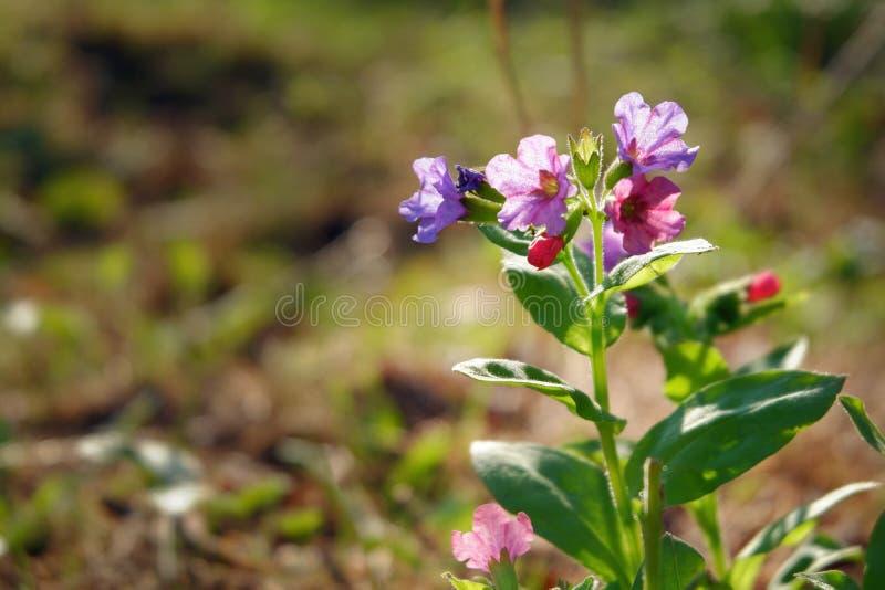 Lili wildflowers na jaskrawym słonecznym dniu obraz royalty free