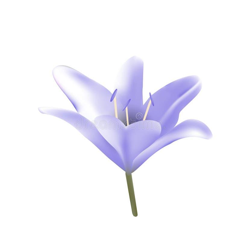 Lilia bleue illustration stock