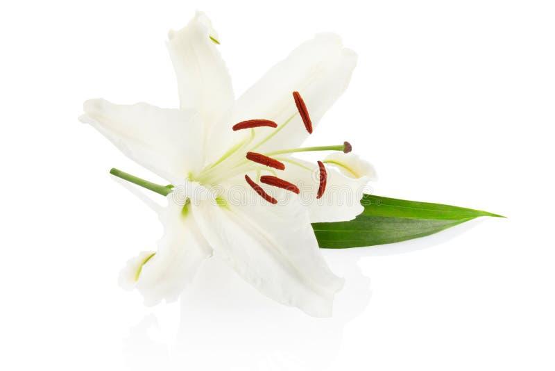 Lilie stockbilder