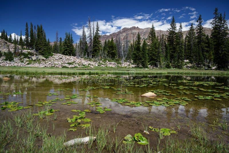 Lilie auf einem Teich stockbild