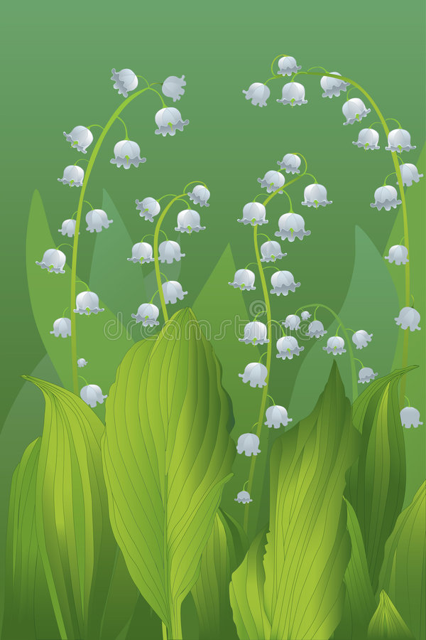 Lilie des Tales stock abbildung