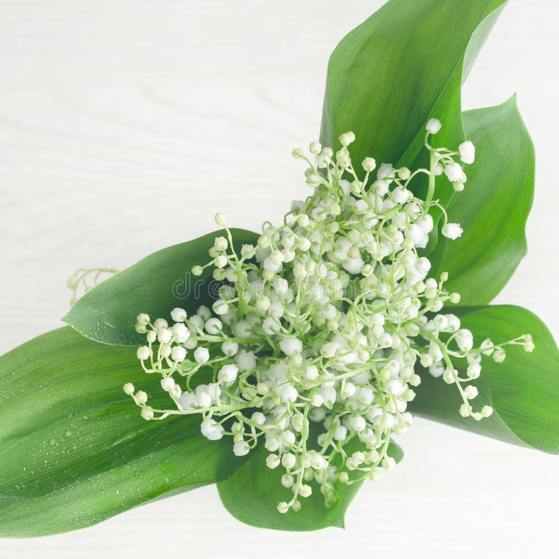 Lilie des Tales auf weißem Holztisch, Draufsicht lizenzfreie stockfotografie