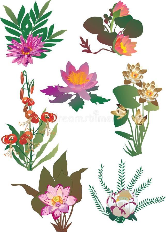 Lilie mit Blattansammlung lizenzfreie abbildung
