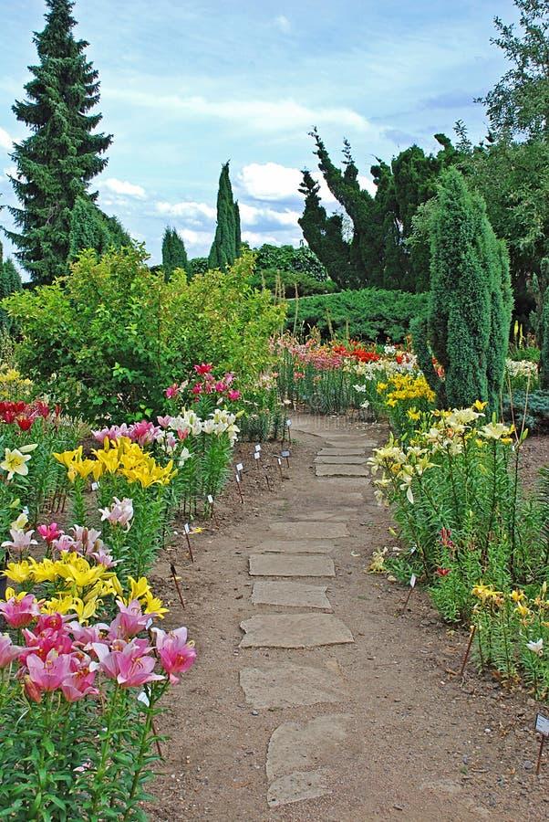 lilie ogrodowe obrazy stock