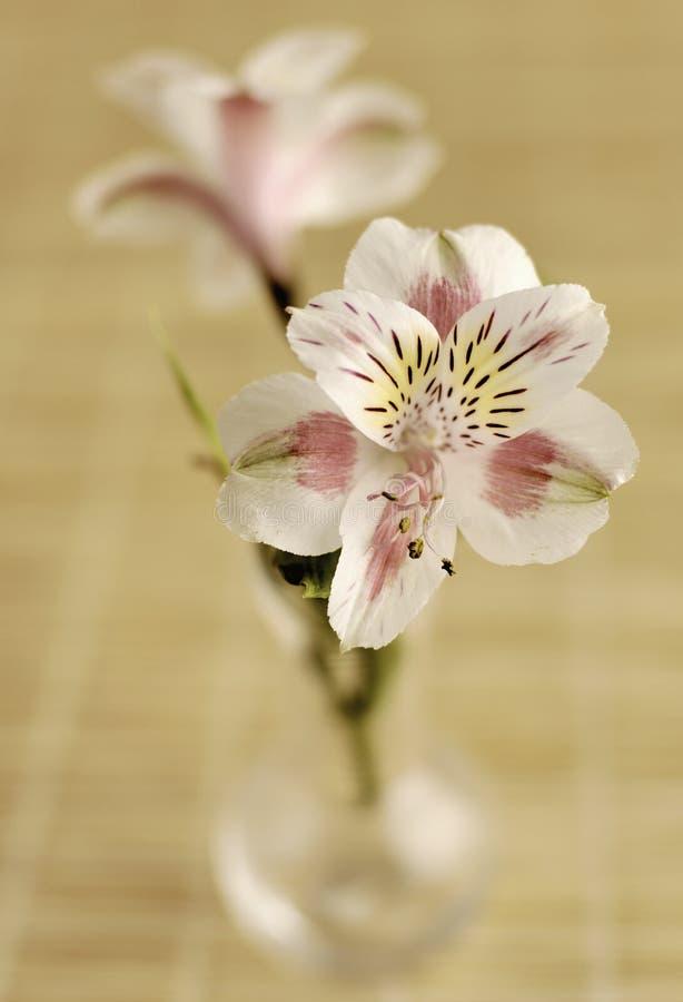Lilien in einem Vase stockfotografie