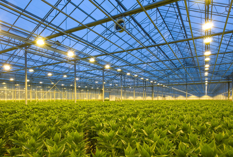 Lilien-Gartenbau lizenzfreies stockbild