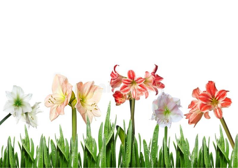 Lilien im Gras lizenzfreie stockfotos