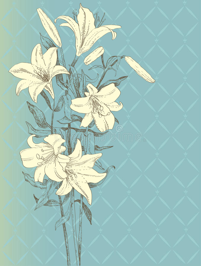 Lilienblume vektor abbildung