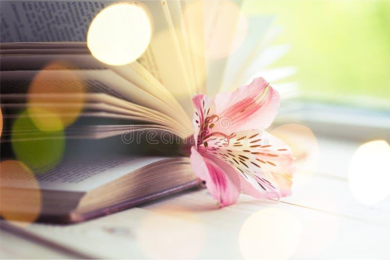 Lilienblume im offenen Buch auf Hintergrund lizenzfreie stockfotos
