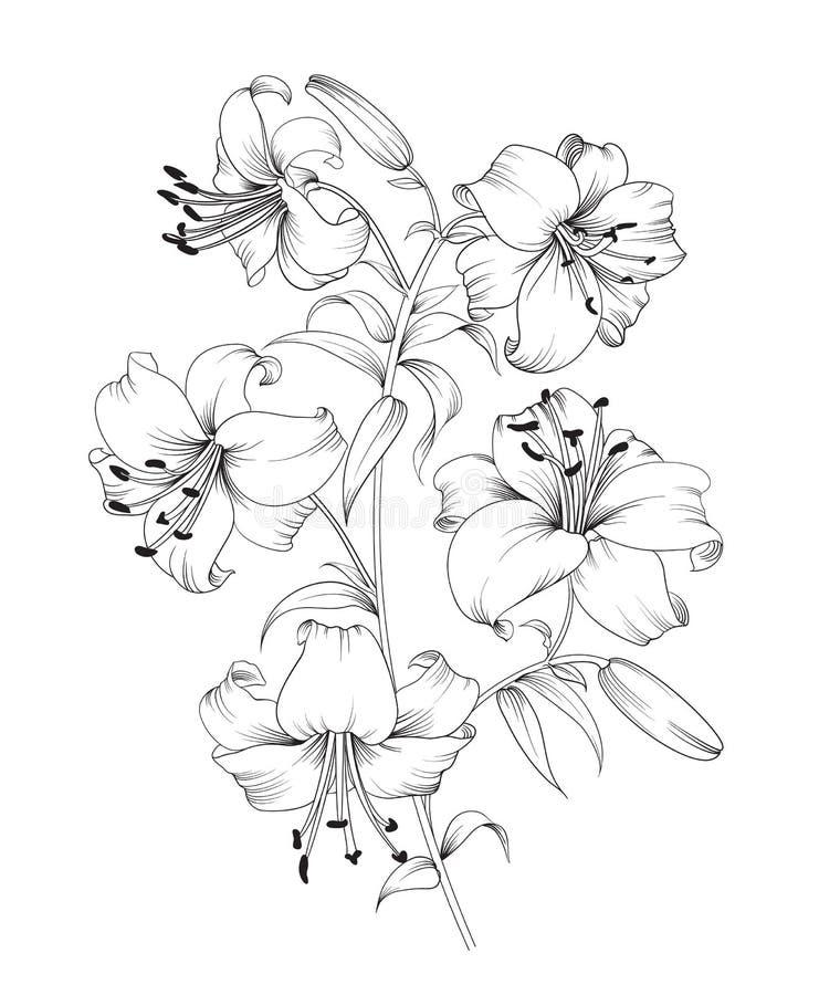 Lilienblumenzusammensetzung stock abbildung