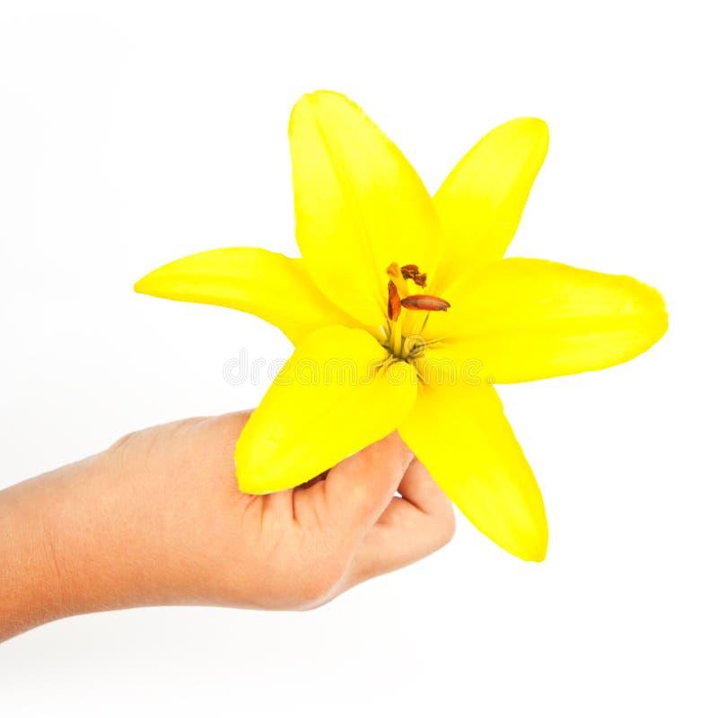 Lilienhandblume stockbilder