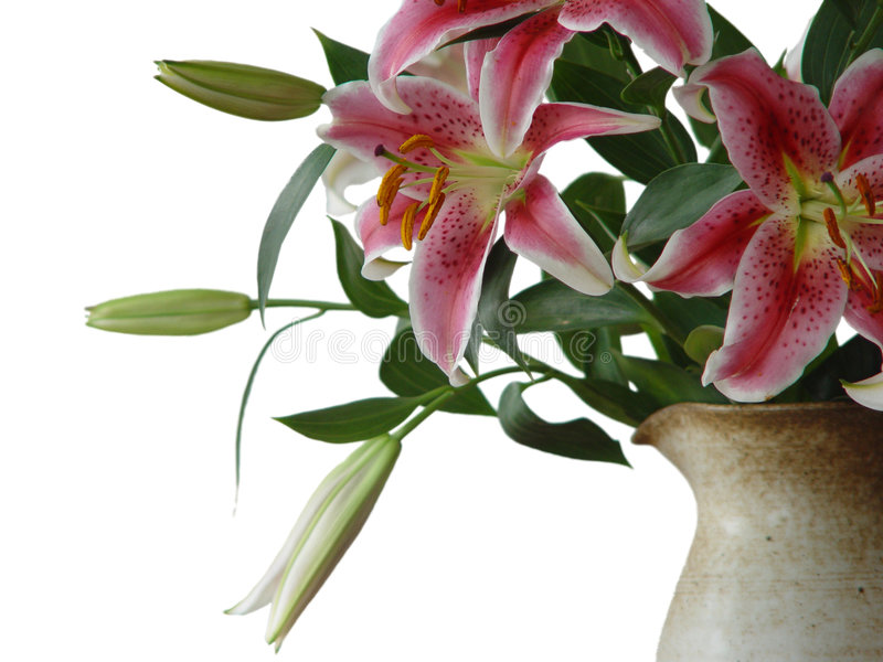 Lilies in a jug