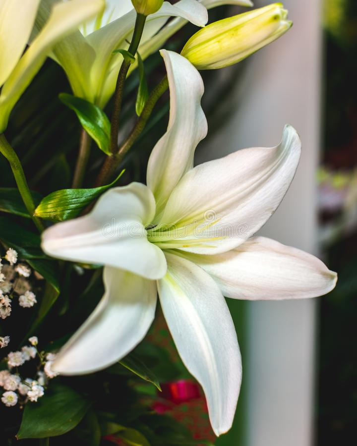 White Lily Flower Background. Lilium Stock Photo - Image of ...