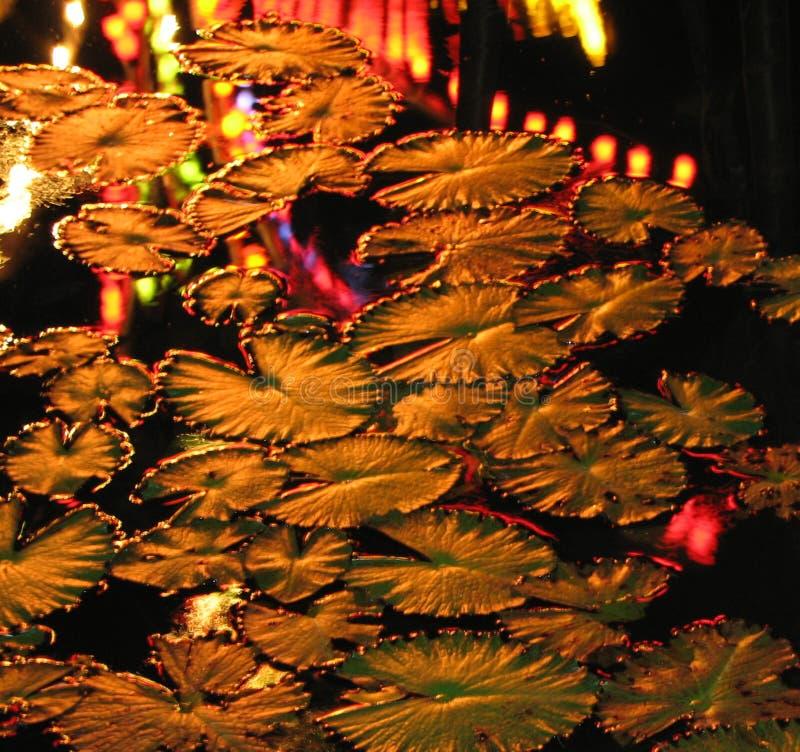 Lilies Free Public Domain Cc0 Image