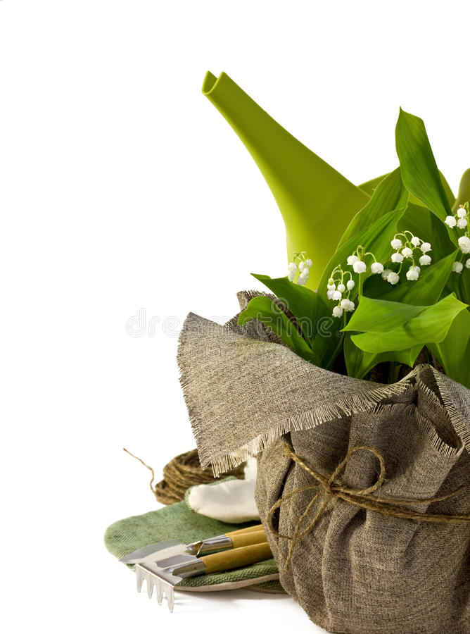 Download Lilies of the valley stock image. Image of fragrant, lilly - 28587877