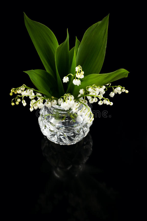 Lilies of the valley in flowerpot. On black background royalty free stock photo