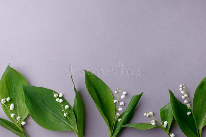 Lilies of the valley on gray background, springtime seasonal background with copy space, happy easter flowers concept.  royalty free stock image