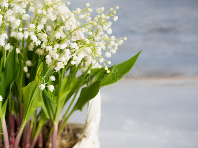Lilies in a white wicker basket. Fresh spring flowers as a gift. Free space on the right for text or design stock photos