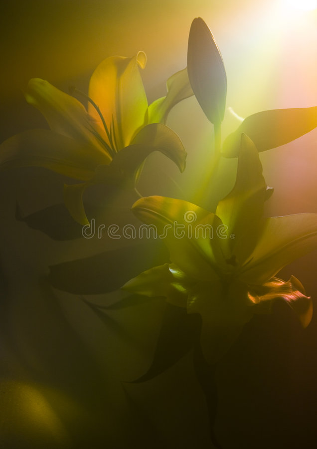 Download Lilium stock image. Image of colour, mysterious, plants - 2160275