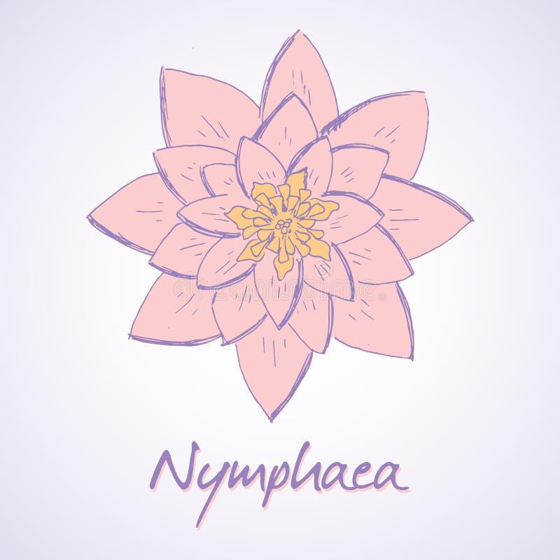Lilja (Nymphaea) stock illustrationer