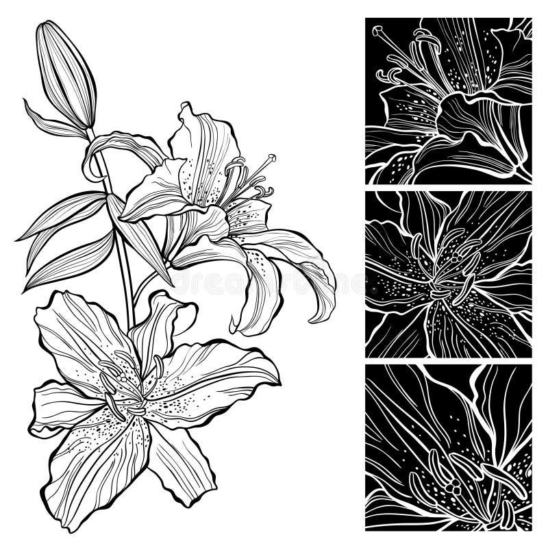 lilja Svartvit illustration Vara kan hälsningkortet royaltyfri illustrationer