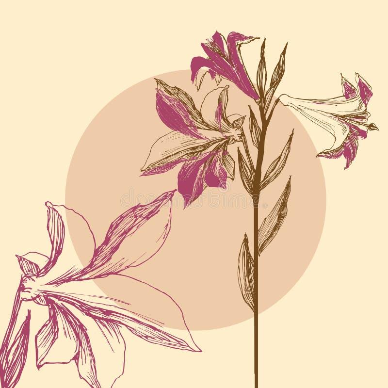Liljabakgrund, blom- hälsningkort royaltyfri illustrationer