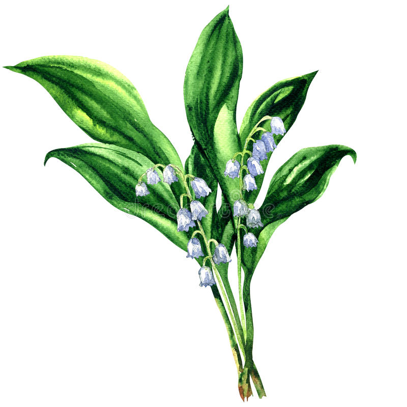 Liljekonvalj bukett av vårblommor som isoleras, vattenfärgillustrationen på vit royaltyfri illustrationer