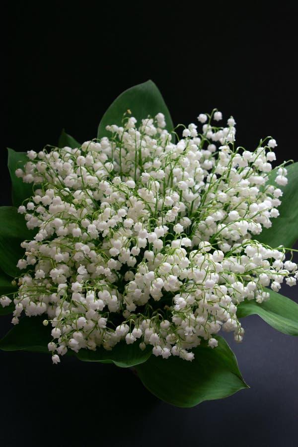 Liljekonvaljblommor p? en svart bakgrund 3 royaltyfri fotografi