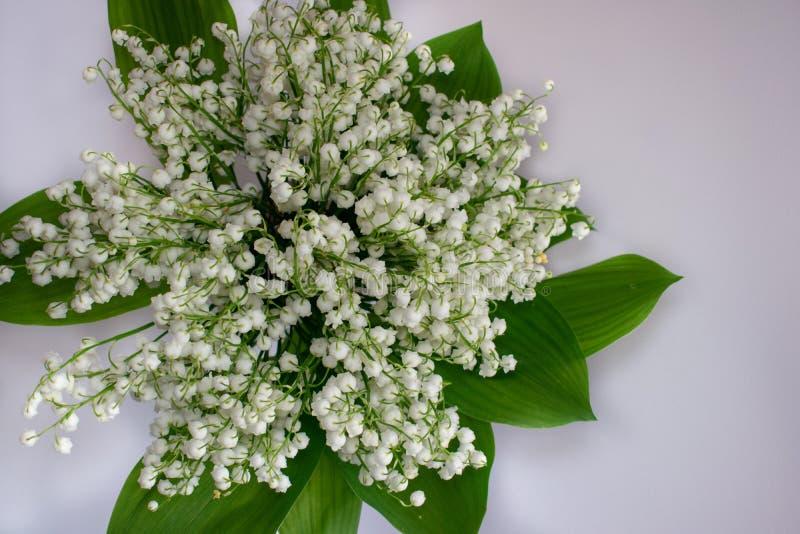 Liljekonvaljblommor p? en vit bakgrund royaltyfria bilder