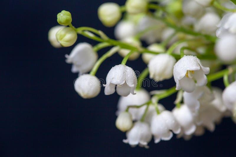 Liljekonvaljen blommar på en svart bakgrund royaltyfri fotografi