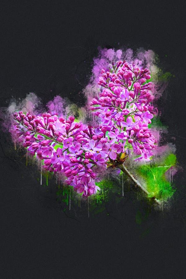 Lillà luminosi di fioritura della molla fotografia stock