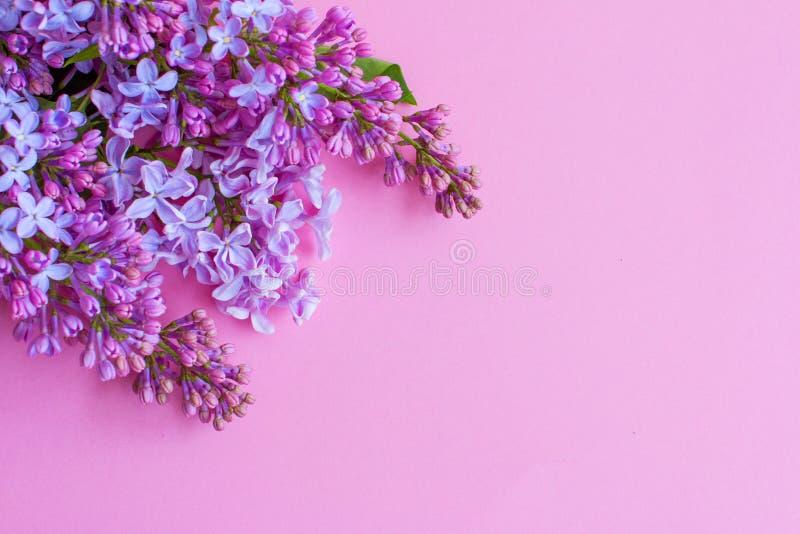 Lill? su fondo rosa immagini stock libere da diritti