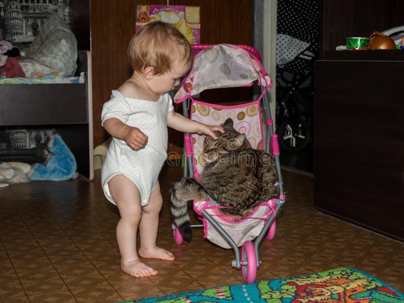 Lilla barnet rullar hans stora katt i ett litet behandla som ett barn leksaksittvagnen arkivfoton