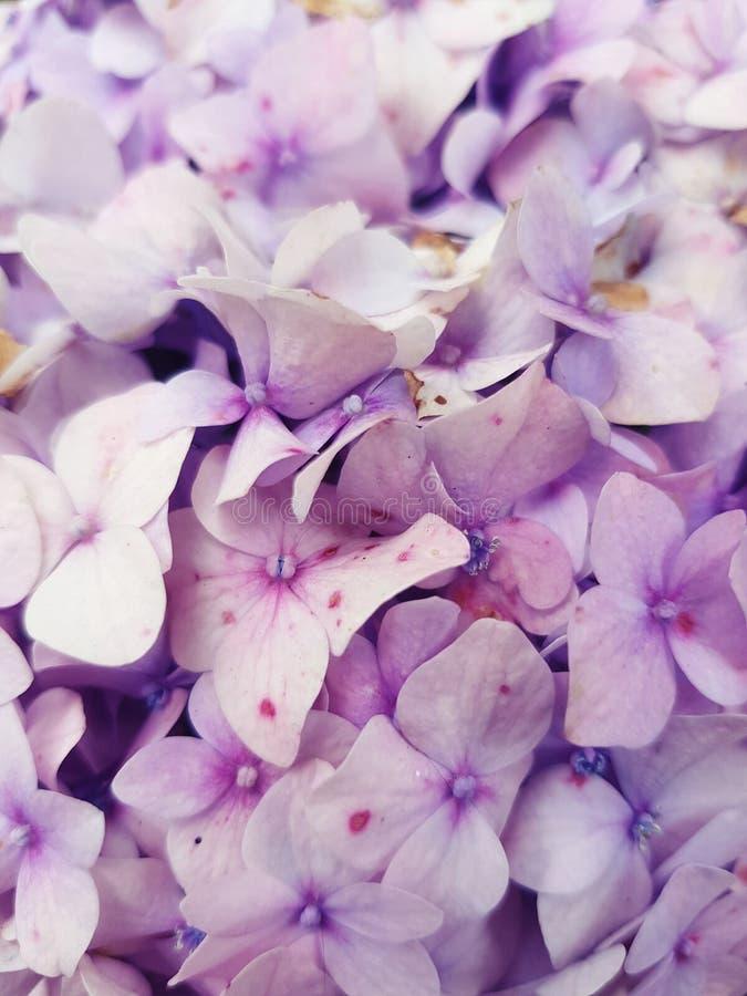 Lilla blommor royaltyfri fotografi