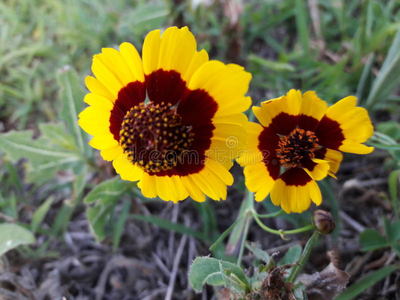 Lilla blommor royaltyfria foton