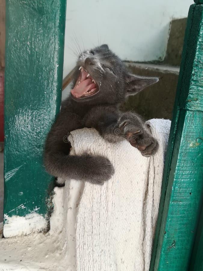 Lilla Cat Black Beautiful royaltyfri foto