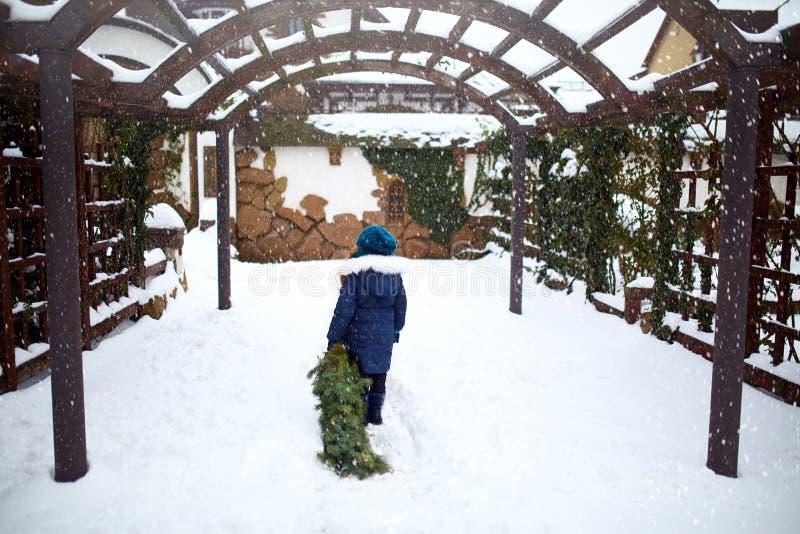 Lilla flickan bär in en julgran till hennes hem på snöfallvinterdag Ungen släpar det gröna gran- eller granträdet på snö fotografering för bildbyråer