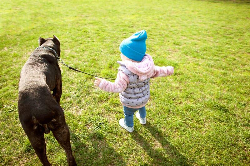 Lilla flickan går i parkera med hennes stora hund arkivbild