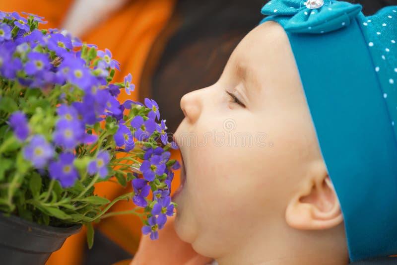 Lilla flickan i en blå sjalett, äter härliga blommor arkivbilder